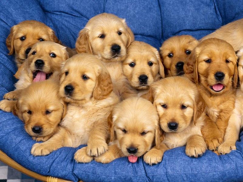 as-melhores-frases-sobre-cachorros-4